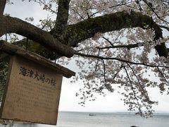 マキノ駅から10分弱で桜並木の入り口に到着。