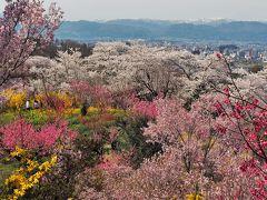 桃源郷と言わしめた福島の花見山。豊かな春色が、ここに一気に集まってきます。どこを見ても百花繚乱!春爛漫を満喫して幸せになれるスポットです。