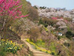 花卉農家の集落でもある花見山周辺。  どこもかもお花に包まれた、のどかな集落をぶらぶら歩くのがお気に入り。歩きやすいように山道も整備されていて、住民の方たちのおもてなしを感じます。  のんびりした静かな空気と・・・美しい春色の世界にとても癒されます。