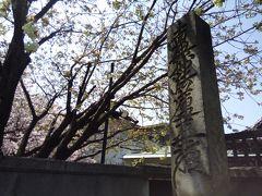 引き続き環七沿いを歩いていると、またまた桜が誘う~
