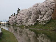 山形駅からは駅近くの霞城公園に向かう。 山形城跡に整備された公園だが、堀周辺の桜は見事。 ただ・・・午後になったためと、霞?のためか青空を見ることができない。 せっかくの桜なんだけど・・・残念。