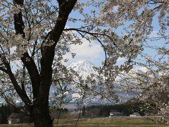 桜の中から妙高山が。越後富士と言われるほど山頂の姿は富士山に似ています。