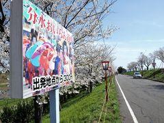 おいらん道中で有名な燕市分水地区の桜を楽しんでいたら・・・。