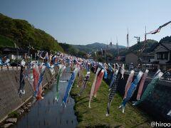 しばらく行くと大量の鯉のぼり。大谷川鯉のぼりフェスティバル