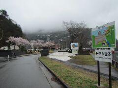 【白川ダム  10:35頃】  道の駅『いいで』を出た後は、同じ飯豊町の山間にある 白川ダムを見学。桜は満開だけど、所々雪が残ってます。