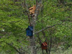 ランチの後はたっぷり撮影を(^^♪  夫を残した(笑)ベンチの前には 鳥の巣箱が! 双眼鏡もありましたが、残念ながら 鳥さんはいなかったそうです。