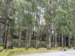 城内の杉林