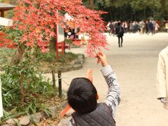 糺の森に寄り道をして、紅葉を見物しました。  紅葉はちょうど見頃で沢山の観光客で賑わっていました。京都の桜と紅葉は殺人的な混雑だから覚悟していったほうがいい、と事前に教わっていましたが、そこまでではありませんでした。通勤電車のほうが倍くらいしんどい。