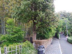 鈴虫寺への道 左の階段を上る。緑が濃い。