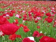 バス旅行 特典で お花を片手に 皆さん 楽しそう(^◇^)