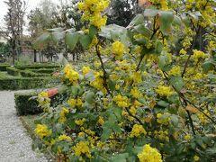 おなかもいっぱいになったので今までほとんど行ったことのないエリアへ。 Piazza サンマルコを抜けて Giardino dei Semplici。 フィレンツェ大学附属自然史博物館であり、植物園です。  毒系植物などもあり興味津々。 シーズンオフなのもあり、草花が咲き乱れていることはなかったけれど 人も少なくゆっくり過ごせました。
