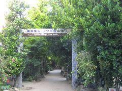 備瀬のフクギ並木 防風林として植えてあるフクギの並木が残っているのはこの辺りだけなのだとか。