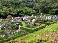 旧古川庭園に到着。駅からハイキング参加者は、入場料150円→120円に割引き。 バラ園を見下ろす。