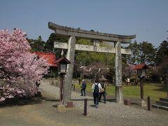 松前神社と桜