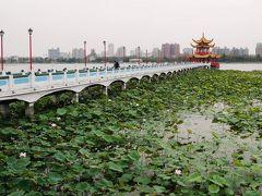 龍を抜けて行くと、橋があり、奥に見える「五里亭」へ向かいます。  「蓮池潬」という名の通り、橋の周りには蓮の群生。