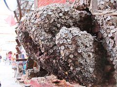 オブジェを脇から眺めると映画【千と千尋】に出てくる蛙が化け物に変化した姿みたいなのだが、このオブジェには名前があり、その名は「コインの木」(そのままのネーミング!)。  このコインの木はただのオブジェではなく、れっきとした神様で歯の痛みを治してれるそうだ。