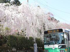 お天気がいい休日は夫とワンコと一緒にドライブを楽しんでいます。 この日は桜が見頃だったのでお花見ドライブです。  室生にある大野寺。 ここは、毎年来ているお気に入りの桜のスポット。 外からもこんな見事な桜を見ることができます!