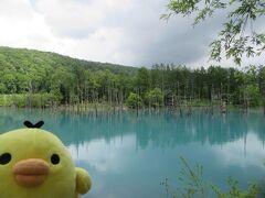 南にドライブして美瑛町にきました。 青い池です。 美瑛の白金温泉の手前3キロぐらいのところにあるよ アップルのOSの壁紙に採用されて有名に。 天気がイマイチだったのでこんな感じだったけど、 晴れていたりするともっときれいかも