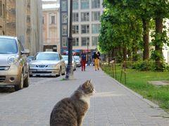 おっ、何と猫ちゃん発見。リガはこの旅で一番寒く、 猫ちゃんとの遭遇は諦めかけていたのに、ラッキー! カリカリ、持ってくれば良かった。