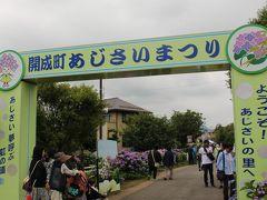 """10時頃、開成町の""""あじさいまつり""""会場に到着! 会場内はとても広いため、添乗員さんがアナベルが咲く 場所へとツアー客全員を案内してくれました。"""