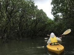 4日目はレンタカーを借りて「黒潮の森 マングローブパーク」へ 予約していたカヌーに乗ります。 この時は満潮だったので結構奥の方まで漕いで入れました。 その分疲れたけど、マングローブに囲まれた森は神秘的でした。