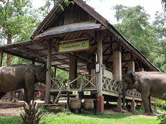 部屋に置いてあったエレファントヴィレッジのパンフレットがとても素敵だったのですが想像通り!入園するといきなり象さんが数頭、自由にしています。