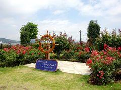 対岸にある横須賀製鉄所の建設にフランス人技師ヴェルニーが貢献したということで命名されたヴェルニー公園。たくさんのバラがきれいでした。
