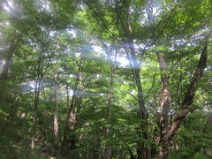 原始林に囲まれた中での登山道を歩いていると、札幌市内であることを思わず忘れてしまいそうになりますが、折しも、丁度、円山球場で開催中の社会人野球の試合の応援の歓声や演奏が聞こえてきたりするのも、なんか円山らしくて良いですね~。
