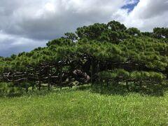 先ずは五枝の松の見学です。