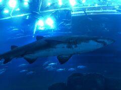 中に入って よくある筒のような中から 上のサメを見ます