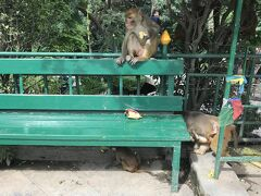スワヤンブナート サル多い! https://goronekone.blogspot.com/2018/08/swayambhunath.html