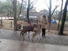 奈良公園でバスを降ります。