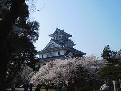 長浜・豊公園にて、長浜城と桜。