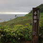 白米千枚田 日本の棚田百選、国指定文化財名勝に指定されている。