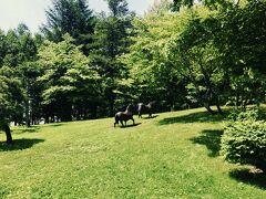 荷物をまとめて、9時にホテルをチェックアウト。それぞれレンタカーに乗り込み、今日の目的地、富良野方面を目指しました。 途中、岩見沢SAでルート会議の為に休憩。 芝生広場を見たら、馬が!!! 作りものです。