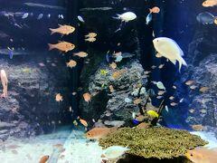 すっきりしたらイオンモール沖縄ライカム店へ向かいます。 有名な水槽ですね。