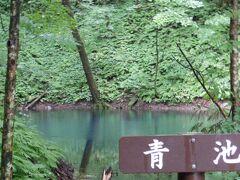 まず初めに青池に行きました 横から見るとただの池なんですが・・・