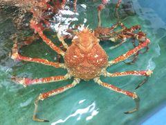 漁港の直売所では発送もしてくれるそうで生きたいタカアシガニを眺めながらお土産を少し買いました。 本当はシーズンは9月から底引き網漁が解禁するので9月から5月くらいまでが蟹や深海魚などのシーズンらしいです。  だから一番おしまいの頃の蟹なのでちょっと心配でした。