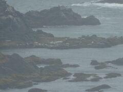 襟裳岬展望台から見えたアザラシたち。