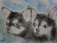 札幌でも、感謝祭で 似顔絵描きです。 ほとんど、子供が多いのですが 大人も、動物も描きます。