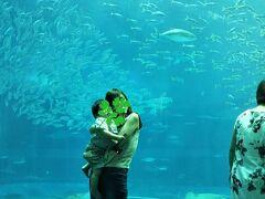 那覇空港到着、 ホテルはかりゆしビーチリゾートにしました。  ホテルから約30Km。ドライブして美ら海水族館へ。 パクチー坊主も興味を持って魚を堪能します。