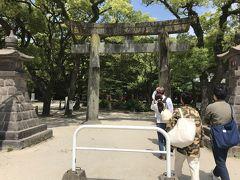 さて、2日目です。 あんなに食べたので朝ごはんはいらず・・・ まずは、ホテル近くの住吉神社を参拝。 緑が多くて気持ちいい。