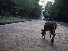 で、翌日。  滞りなく、ミッションを終え(きつかった~)京都から新幹線で東へ帰ろうと思ったところに、人身事故の一報が。東京-博多間で運転見合わせって・・・  先日は台風で旭川で停滞したし、まったく。  1)動くまで待つ。 2)諦めて京都に泊まる。 3)諦めて大阪に泊まる。  の3つを脳内会議。  10月の金曜日に、京都でホテルを確保するのは難しいし、大阪へ戻るのも面倒。 京都駅は多分人でごった返しているに違いない。 何時動く分からない新幹線を待つのも辛い。  で、選んだのは4つ目の案、奈良へ行っちゃえ! ということに。 まあ、明日は土曜日だし。  丹波橋から近鉄で奈良へ。  とりあえず春日大社へ。