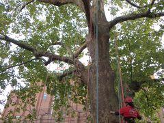 にれの木広場では ツリークライミングが  体験できちゃいます