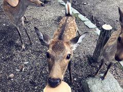 鹿さんのおせんべいあげたよー(・(仝)・)