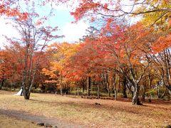 うわぁ~、素敵に色づいた木々がいっぱい!  ここにはウェディング撮影してる人達が3組も…!外国の方だけでなく、日本の方もいました。