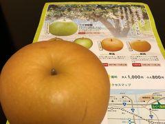 瑞々しい梨をお土産に購入