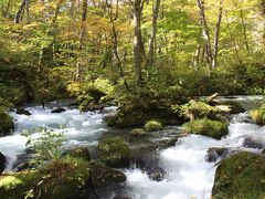 昨日に続いて「阿修羅の流れ」 奥入瀬の一番の見どころです。  紅葉にはやや早く、まだ緑の樹木も多いですが、日の光が木々の中から差し込み、とても美しい渓流と実感できます。