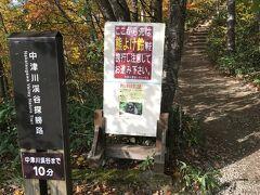 中津川渓谷にはレストハウスの駐車場からスタート  カメ虫がめちゃ多くて皆さん踏んでしまっているので臭い臭い!!  熊鈴なんか持って来てなかったよー  まあ人が多いし大丈夫でしょ  渓谷までは下りなので10分ほどですが  帰りの登りは結構ハードで15分はかかります  橋に寄るならさらに15分は余計にかかります  ハイヒールとかでは無理