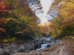 色彩豊かで渓流に映えます  落ち葉はすでに枯れ気味の色